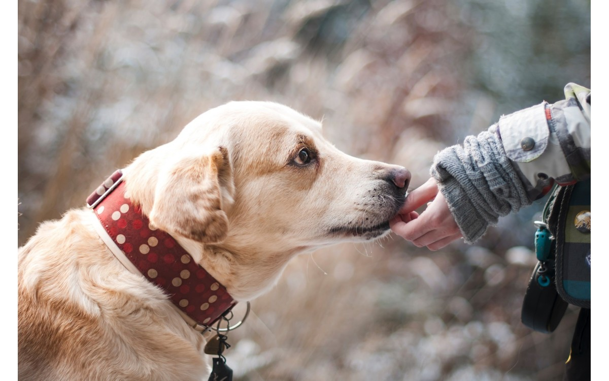 Pet Trusts: Caring for a Pet That Outlives Its Owner