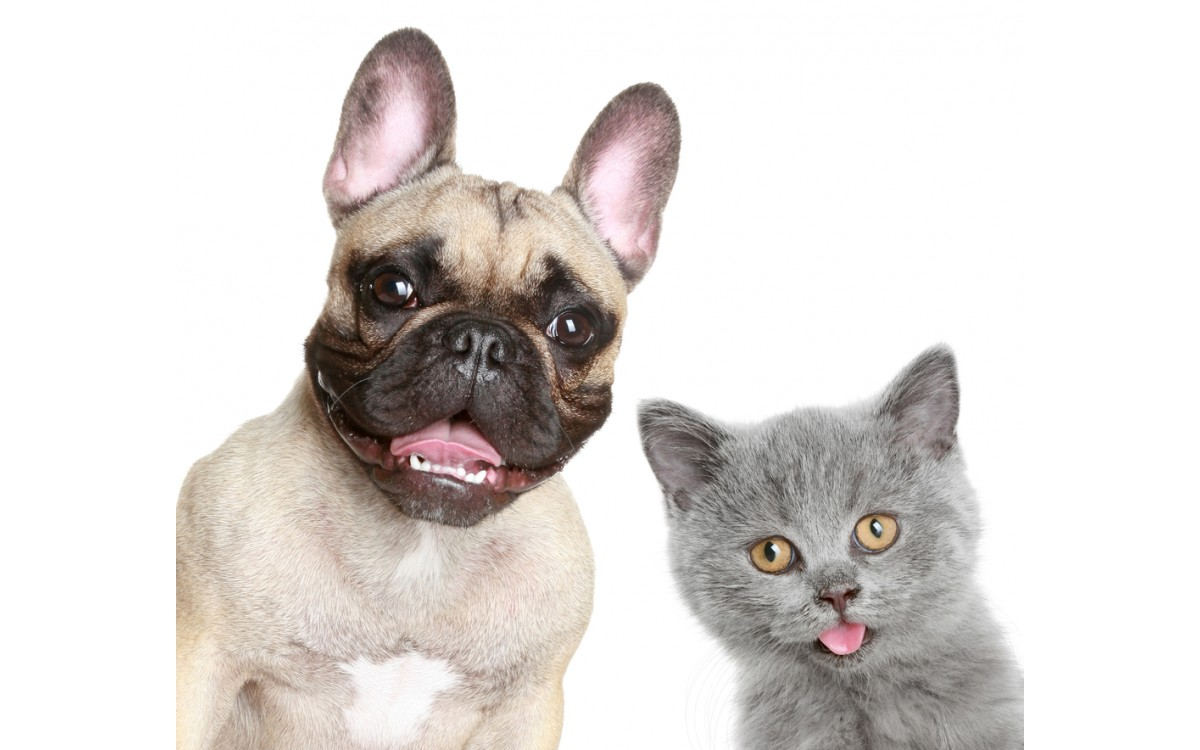 Pet Custody: Who Gets the Pets in the Event of a Divorce